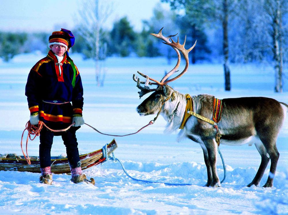 Северный олень - символ Лапландии