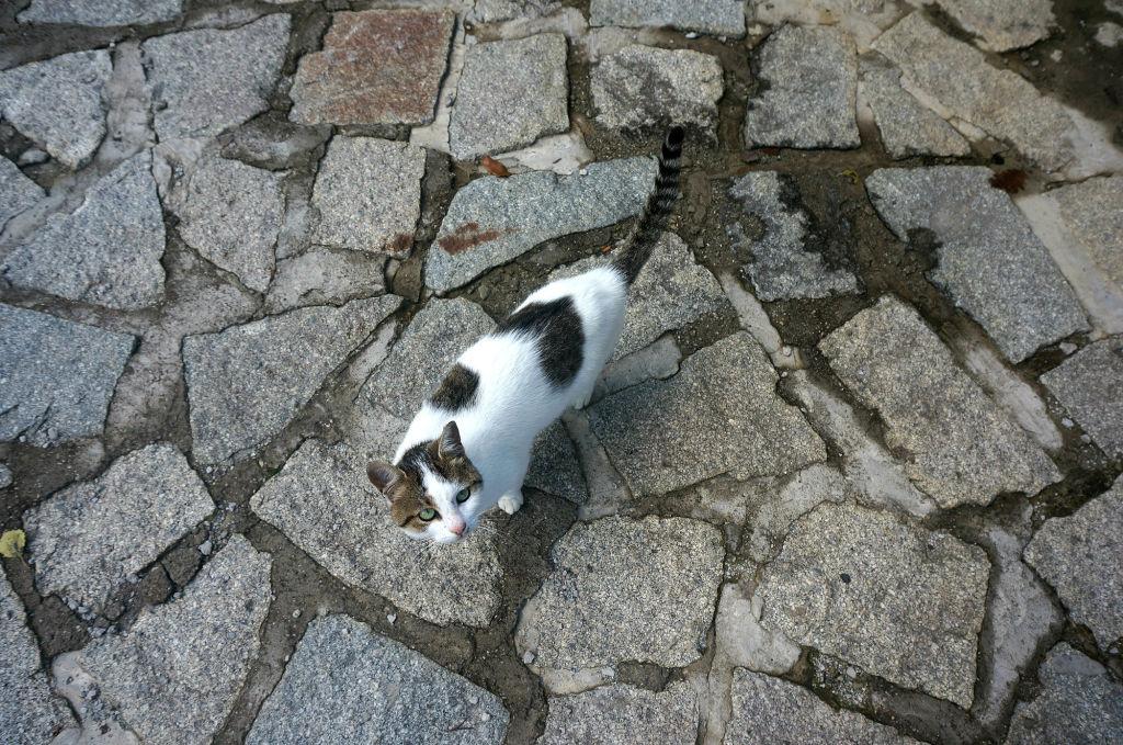 Конечно же, как и в фильмах Кустурицы, в деревне много домашних животных