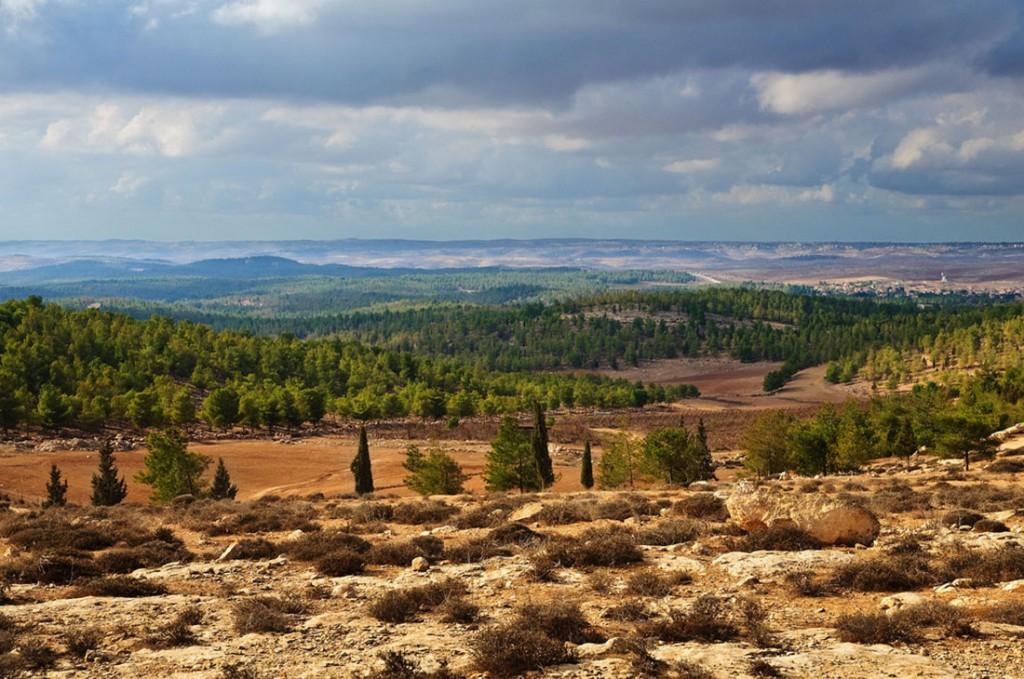 лес-Ятир-в-Израиле