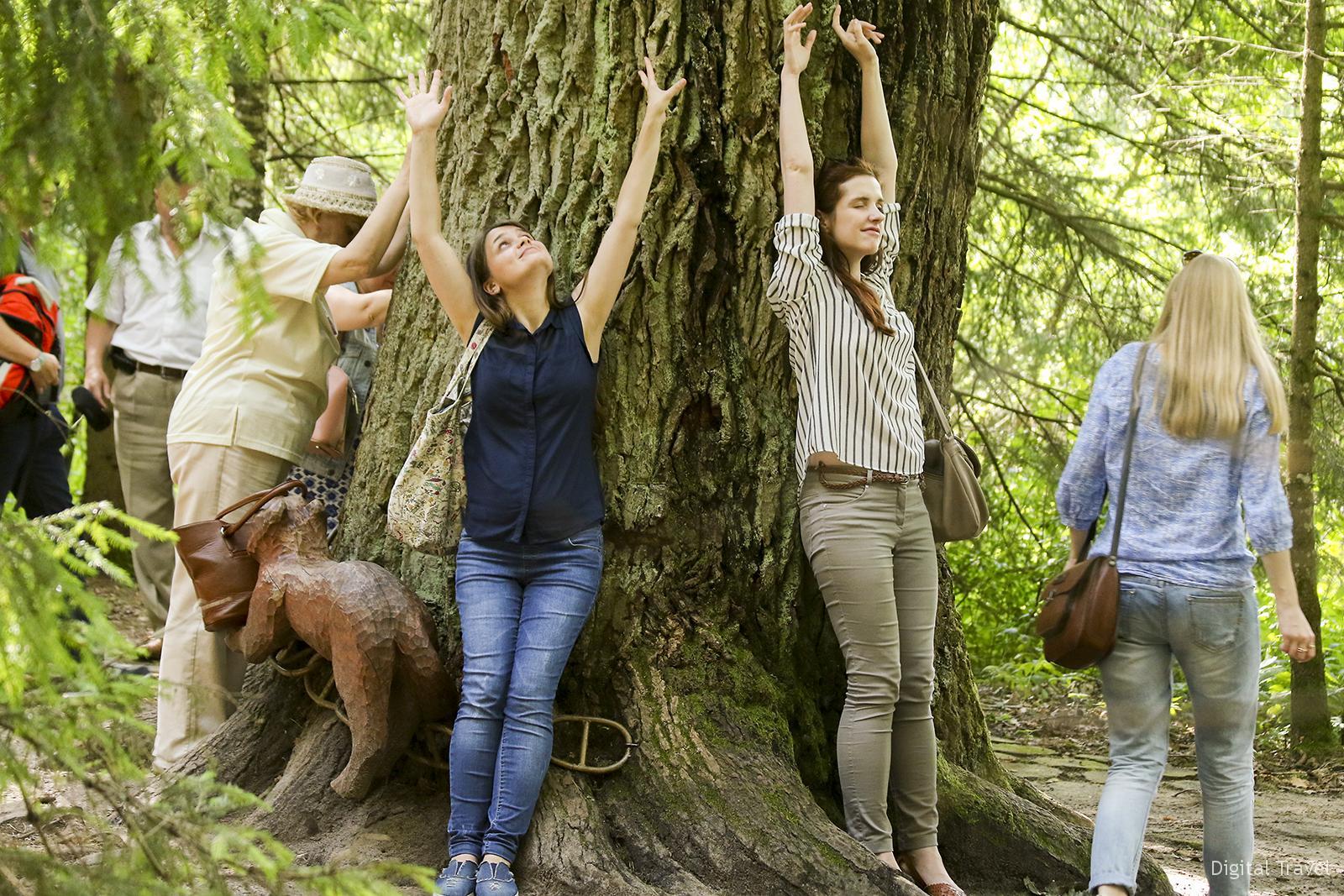 500-летний дуб, который исполняет желания