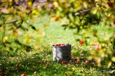 МНС: налогообложение для хозяев агроусадеб не изменится